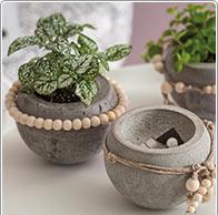 Cement Planting Pot