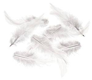 Federn, 15 Stück weiß (90-150 mm)