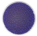 Rocailles transparent (2,6 mm), 20 g marineblau