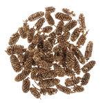 Pigne di betulla, prodotto naturale