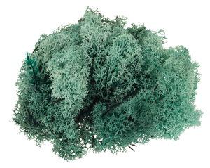 Musgo de Islandia (50 g) color salvia