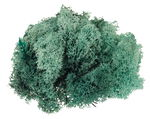 Musgo de Islandia (50 g) color salvia