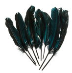 Ganzenveren, zwart (16 - 20 cm) 8 stuks