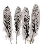 Plumas de ganso - Rayas de zebra (20 - 22 cm) 4 ud