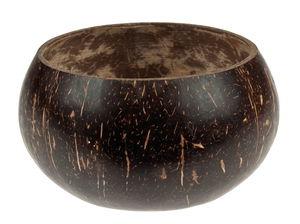 Noce di cocco decorativa, levigata